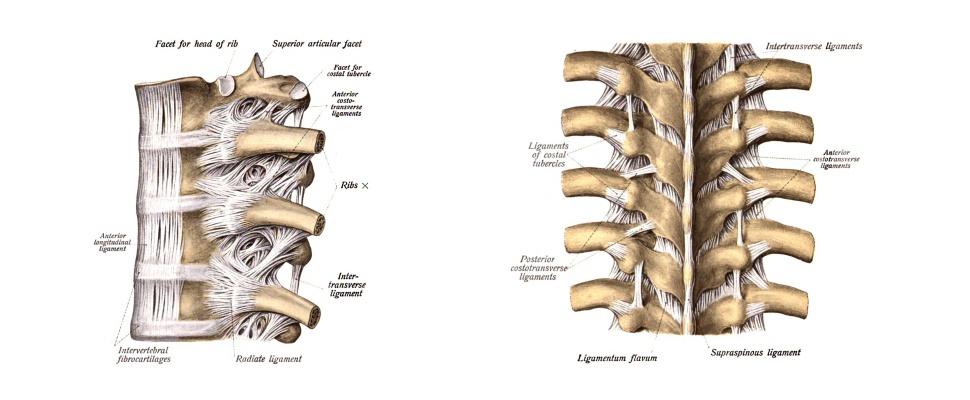Bei Rückenschmerzen Rückenanalyse